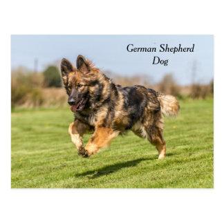 Postkarten-Schäferhund-Hundeelsässer Postkarte