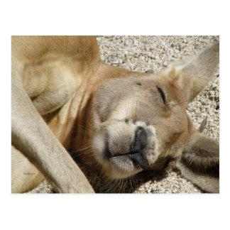 Postkarten-Schlafenkänguruh QLD Australien Postkarte