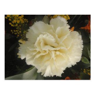 Postkarten-weiße Gartennelken-Schönheit Postkarte