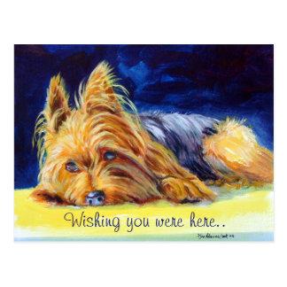 Postkarten Yorkshires Terrier