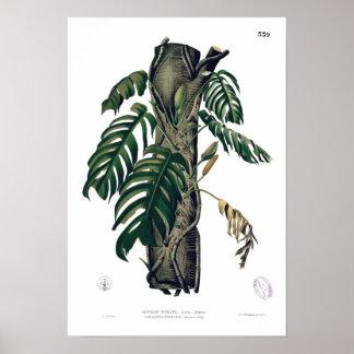 POTHOS? PINATA botanisches tropisches Blatt-Plakat Poster