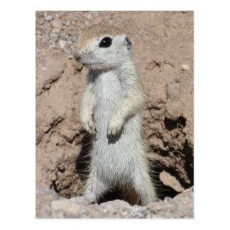 Power-Förster-Eichhörnchen-Postkarte Postkarten