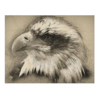 Prachtvoller Weißkopfseeadler Setch Postkarten