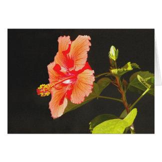Prägeartiger roter Hibiskus, Brendas Blume Karte