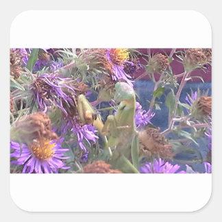 Preying Mantis u. lila Kegel-Blumen Quadratischer Aufkleber