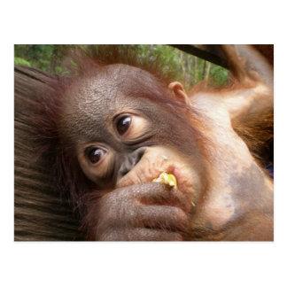 Primat-Orang-Utan Träume der Mama