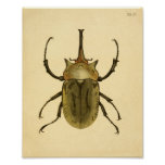 "Print ""Entomologie IV"" Poster"