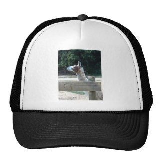 Profil des Lamas Baseballkappen