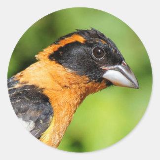 Profil eines männlichen schwarzköpfigen Grosbeak Runder Aufkleber