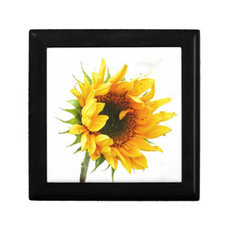 Provincetown Sonnenblume Schmuckschachtel