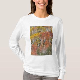 Provo Fluss- und Espenbäume 15 T-Shirt