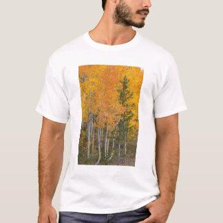 Provo Fluss- und Espenbäume 7 T-Shirt