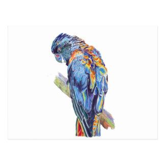 Psychedelischer Papageien-AustralierCockatoo Postkarte
