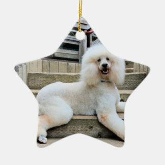 Pudel - gebrannt - Trainer Keramik Stern-Ornament
