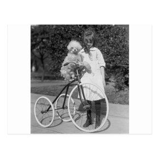 Pudel Perch, 1913 Postkarte