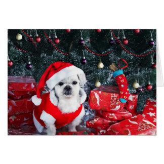 Pudel Sankt - Weihnachtshund - Weihnachtsmann-Hund Karte