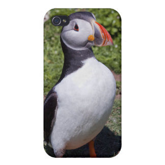 Puffin iPhone 4 Speck-Kasten iPhone 4/4S Cover