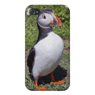 Puffin iPhone 4 Speck-Kasten iPhone 4 Cover