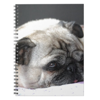 Pug Mops - Photography: Jean-Louis Glineur Spiral Notizblock