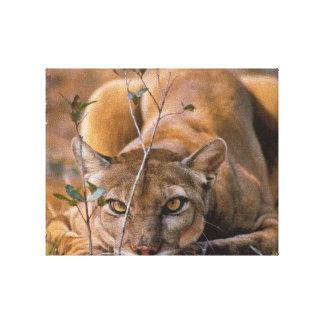 Puma auf einer Jagd Leinwanddruck