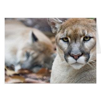 Puma, Berglöwe, Florida-Panther, Puma 2 Karte