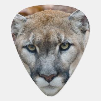Puma, Berglöwe, Florida-Panther, Puma 2 Plektron