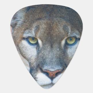 Puma, Berglöwe, Florida-Panther, Puma Plektrum