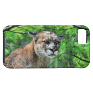 Puma-Berglöwe-u. Sommer-Kiefern Tough iPhone 5 Hülle