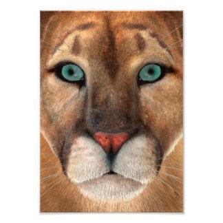 Puma Fotodruck