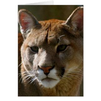 Puma-Katzen-Gruß-Karte Karte