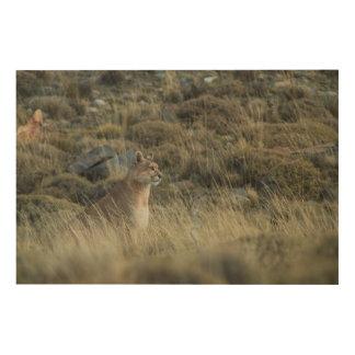 Puma mischt in das Land Holzwanddeko