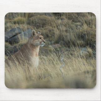 Puma mischt in das Land Mousepad