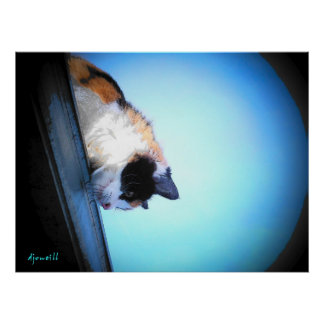 Puma schaut unten durch djoneill poster