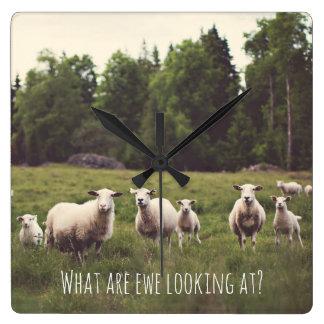 Punny Schafe mit Haltungs-Foto Land-Weide Quadratische Wanduhr