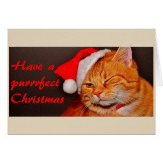 Purfect Weihnachtskatzen-Weihnachtskarte Karte