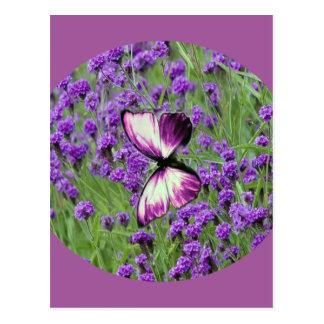 Purple_Butterfly_Lavender, Postkarte