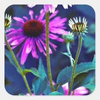 Purple Coneflowers Quadratischer Aufkleber