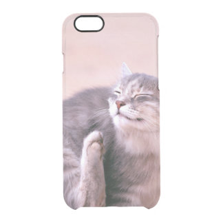 Pussy kümmerte sich durchsichtige iPhone 6/6S hülle