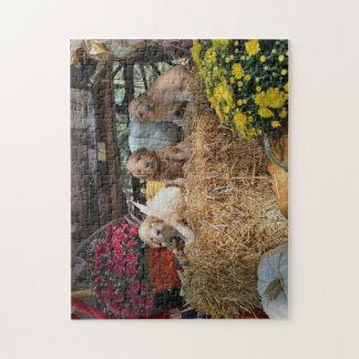Puzzle Goldendoodle Welpen