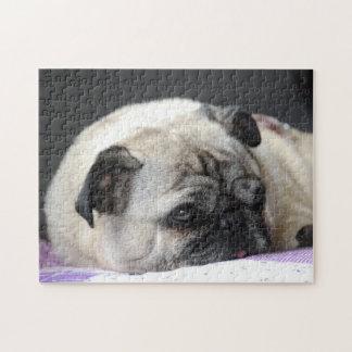 PUZZLE Mops Pug Carlin - Pics: Jean-Louis Glineur