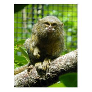 PygmäenMarmoset Postkarte