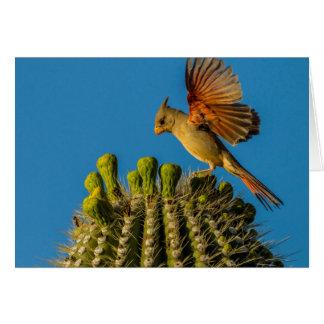 Pyrrhuloxia auf Saguaro, Arizona Karte