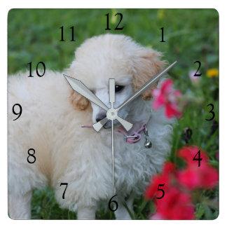 Quadratische Uhr des Zwergpudels