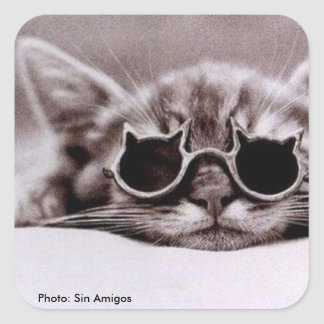 Quadratischer Aufkleber: Coolste Katze lebendig Quadratischer Aufkleber