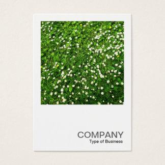 Quadratisches Foto 0136 - Gänseblümchen-Rasen Visitenkarte