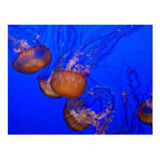 Quallen im Ozean-Aquarell Postkarte
