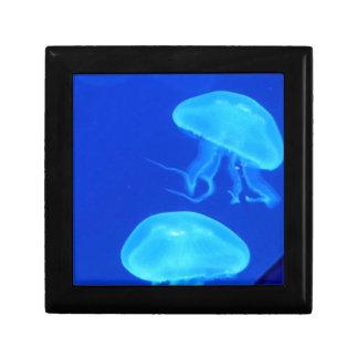 Quallen-North Carolina-Aquarium Schmuckschachtel