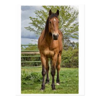 Quarterhorse Postkarte