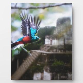 Quetzel in Tikal Fotoplatte