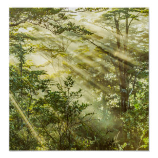 Queulat Park, Patagonia-Waldlandschaft, Aysen, Poster